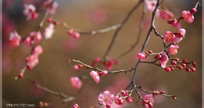 3월에 가볼만한곳/3월에가볼만한 여행지 - 양산 통도사 홍매화 by 엔죠